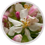 Apple Blooms Round Beach Towel