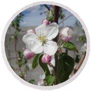 Apple Blossom Round Beach Towel