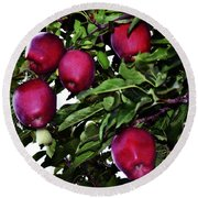 Apple Picking Time Round Beach Towel