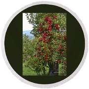 Apple Tree Round Beach Towel