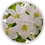 Apple Tree Blossoms Round Beach Towel