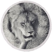 Approaching Lion Round Beach Towel