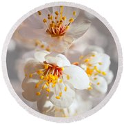 Apricot Blooms Round Beach Towel