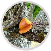 Apricot Leaf And Lichen Round Beach Towel