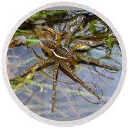 Aquatic Hunting Spider Round Beach Towel