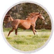 Arabian Horse Running Free Round Beach Towel