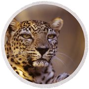 Arabian Leopard Panthera Pardus 1 Round Beach Towel