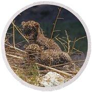 Arabian Leopard Panthera Pardus Cubs Round Beach Towel