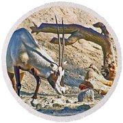 Arabian Oryx In Living Desert In Palm Desert-california Round Beach Towel
