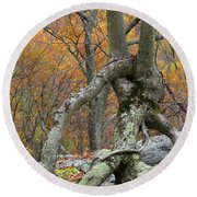 Arboreal Architecture Round Beach Towel