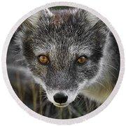 Arctic Fox In Summer Coat Round Beach Towel