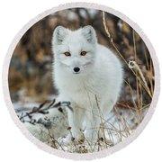 Arctic Fox Round Beach Towel