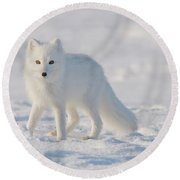 Arctic Fox Out On The Pack Ice Round Beach Towel