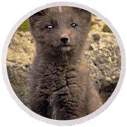 Arctic Fox Pup Alaska Wildlife Round Beach Towel