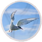 Arctic Tern Sterna Paradisaea In Flight Round Beach Towel