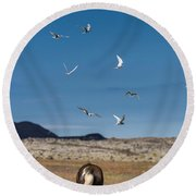 Arctic Terns With Mare And Foal Round Beach Towel