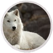 Arctic Wolf Adult Round Beach Towel
