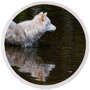 Arctic Wolf In Pond Round Beach Towel