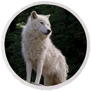 Arctic Wolf On Hill Round Beach Towel