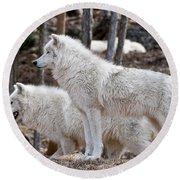 Arctic Wolf Pair Round Beach Towel