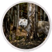 Arctic Wolf Picture 242 Round Beach Towel