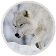 Arctic Wolf Pictures 1054 Round Beach Towel