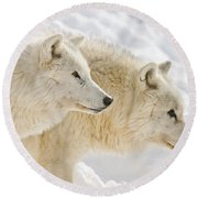 Arctic Wolf Pictures 1081 Round Beach Towel