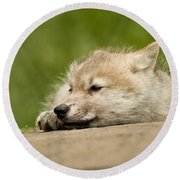 Arctic Wolf Pictures 1121 Round Beach Towel