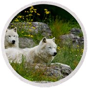 Arctic Wolf Pictures 1128 Round Beach Towel