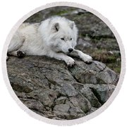 Arctic Wolf Pictures 1142 Round Beach Towel