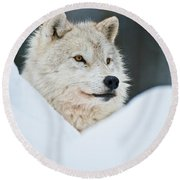 Arctic Wolf Pictures 1144 Round Beach Towel