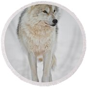 Arctic Wolf Pictures 1146 Round Beach Towel