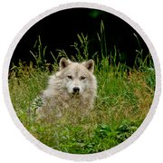 Arctic Wolf Pictures 1172 Round Beach Towel