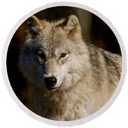 Arctic Wolf Pictures 1224 Round Beach Towel