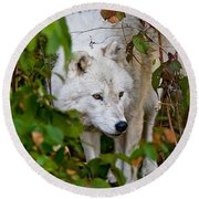 Arctic Wolf Pictures 1228 Round Beach Towel