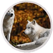 Arctic Wolf Pictures 34 Round Beach Towel