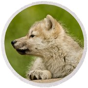 Arctic Wolf Pictures 340 Round Beach Towel