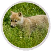 Arctic Wolf Pictures 341 Round Beach Towel