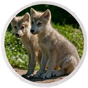 Arctic Wolf Pictures 346 Round Beach Towel