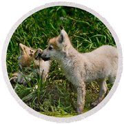 Arctic Wolf Pictures 347 Round Beach Towel