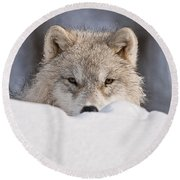 Arctic Wolf Pictures 417 Round Beach Towel