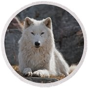 Arctic Wolf Pictures 518 Round Beach Towel