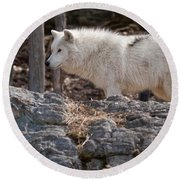 Arctic Wolf Pictures 525 Round Beach Towel