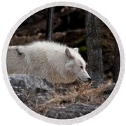 Arctic Wolf Pictures 541 Round Beach Towel