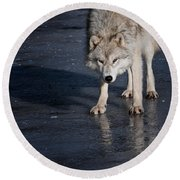 Arctic Wolf Pictures 766 Round Beach Towel