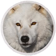 Arctic Wolf Pictures 814 Round Beach Towel