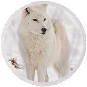 Arctic Wolf Pictures 844 Round Beach Towel
