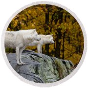 Arctic Wolf Pictures 930 Round Beach Towel