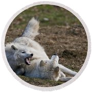 Arctic Wolf Pictures 996 Round Beach Towel