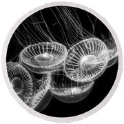 Area 51 - Moon Jellies Aurelia Labiata Round Beach Towel